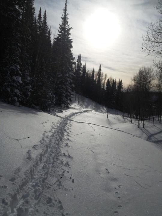 Ski trail crosses elk trail on Eric's Loop -- West Elk trails