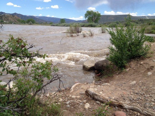 The Colorado River is currently running swift and high. At times overflowing the island's banks